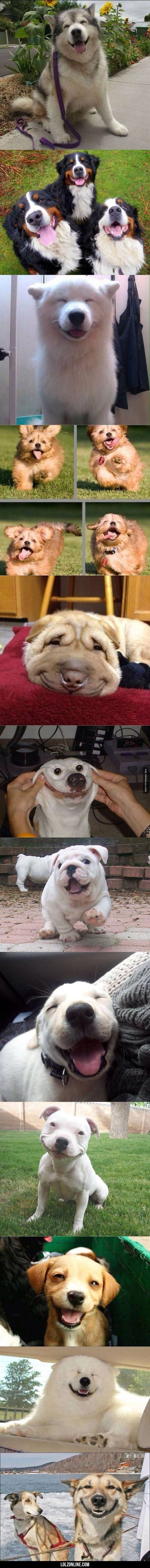 Best Smiling Dogs On The Internet#funny #lol #lolzonline