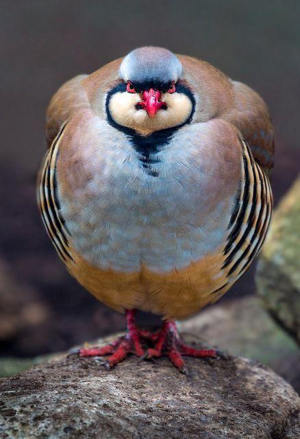 Fetter Vogel   – Vögel (Birds)