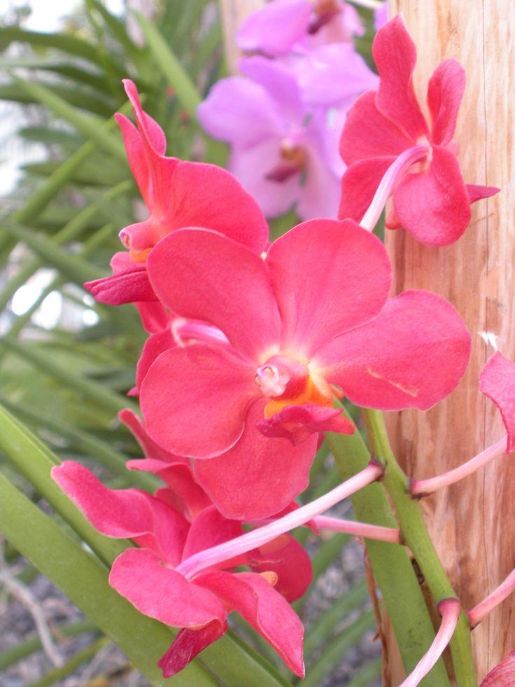 best tropical caribbean flowers, plants  flora images on, Beautiful flower