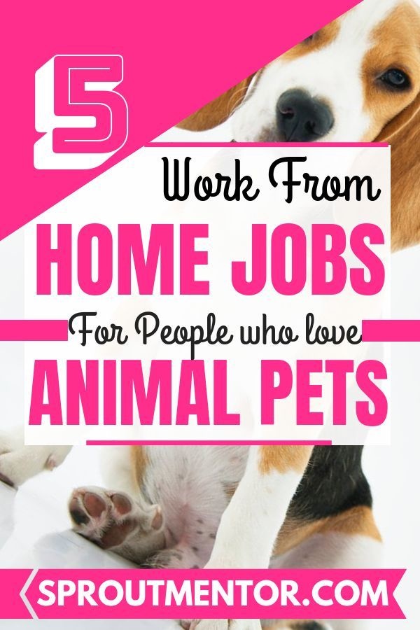 5 Of The Best Work From Home Jobs For Pet Lovers Sproutmentor Work From Home Jobs Working From Home Legit Work From Home