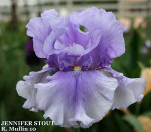"(Ron Mullin 2010) TB iris, 36"" (91 cm), ML. HM 2012, AM 2015! Flowers: S. pale violet becoming darker purple at midrib; F. pale violet at edge becoming more intense at heart; beards yellow orange in t"