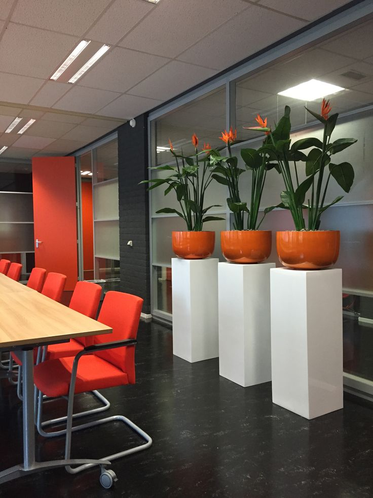 Hoogglans oranje plantenbakken op hoogglans witte zuilen met prachtige Strelitia planten!
