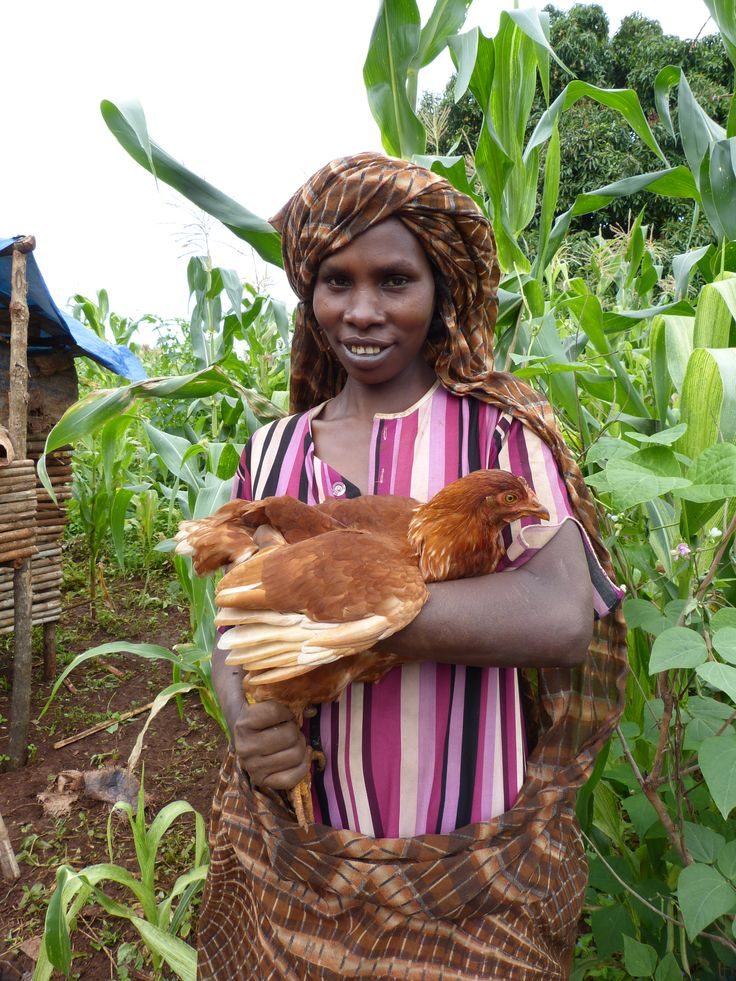Hatch a new future for a #woman in #Ethiopia! Your gift of $70 will provide a rural Ethiopian family with 10 chicks and the support needed to rear #poultry as a source of food and income.