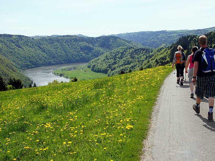 Foto: Alois Peham: Wanderung am Donausteig zur Schlögener Schlinge