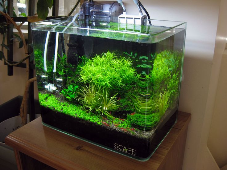 Shrimp tank with azoo palm filter aquarium pinterest for Shrimp fish tank