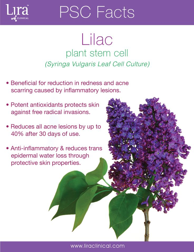 Be well this Wednesday with Lilac Plant Stem Cell! This powerful plant stem cell can be found in our ICE line of products and it's benefits are a perfect match. Discover the ICE Line, http://www.liraclinical.com/products/