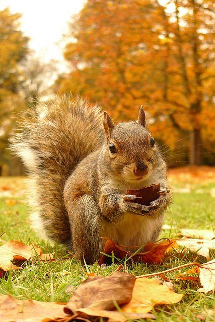 Cani Squirrel