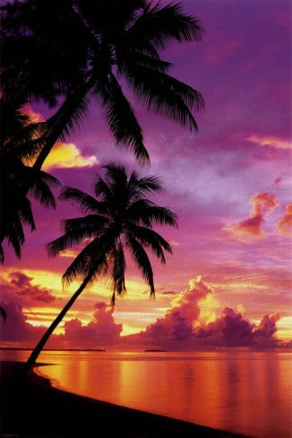 Tahitian SunsetBeach Sunsets, Posters Prints, Beautiful, Palms Trees, Sunsets Pictures, Tahitian Sunsets, Travel, Places, Sunsets Photography