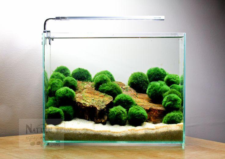 Marimo Ball Aquascape Aquascaping Live Aquarium Plants