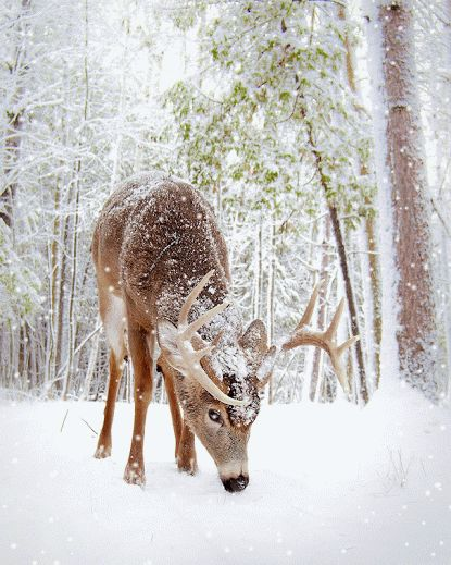 Oh Deer in a  Snowy Day in Stittsville, Ontario, Canada