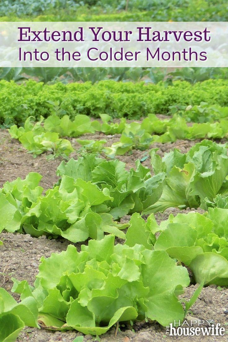5651 best gardening ideas tips u0026 tricks images on pinterest