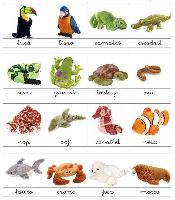 vocabulari d'animals - Buscar con Google