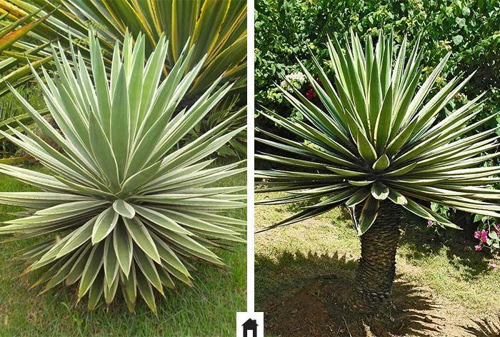 38 melhores imagens de plantas resistentes ao sol no - Planta exterior resistente ...