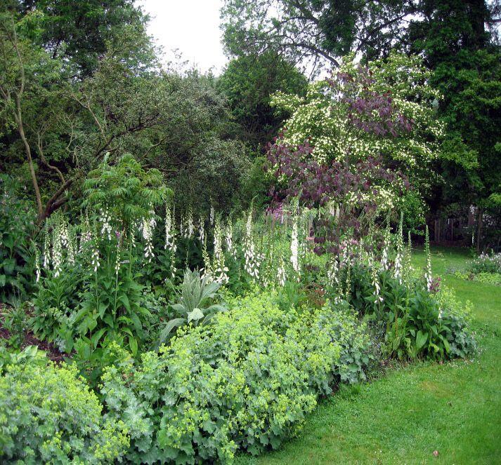 28 best Woodland gardens images on Pinterest Woodland garden