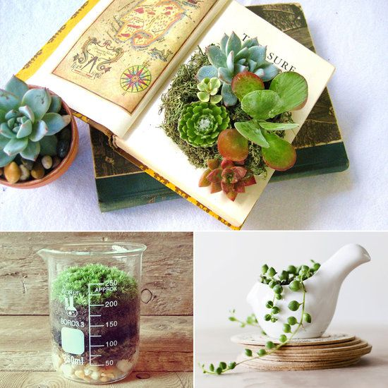 Cute Office Desk Plants and Planters