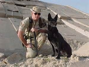 Military Working Dogs and their handlers in action. Official Adoption ...