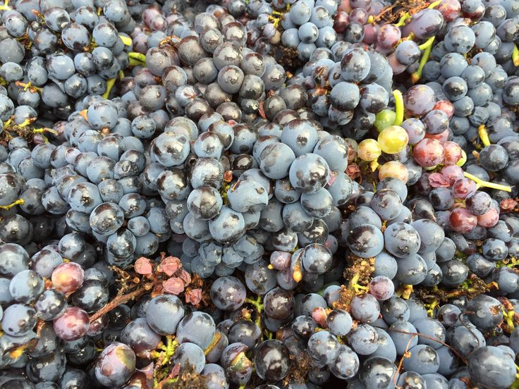 5 journalistes parlent du vin