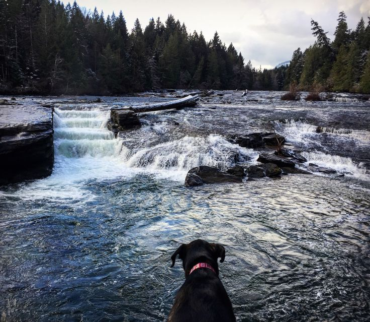 Nymph Falls, Vancouver island will always have a place in my heart (and Daisy's too 🐾)