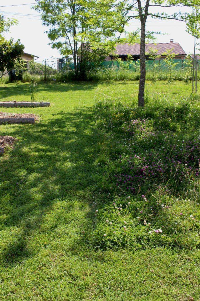 gestion diff renci e prairie pelouse gazon herbes folles prairie fleurie jardin rustique. Black Bedroom Furniture Sets. Home Design Ideas