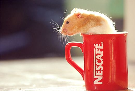 Coffee mug red hamster picture photos photography