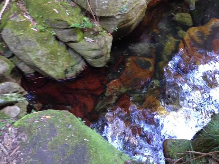 Wards Cannon. Stunning red in creek. Such sweet water.
