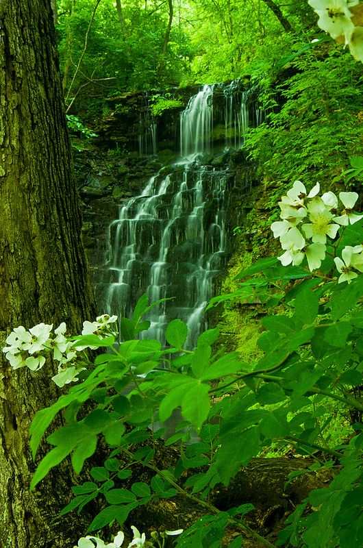 Hurst Falls at Cove Spring park in Frankfort, KY