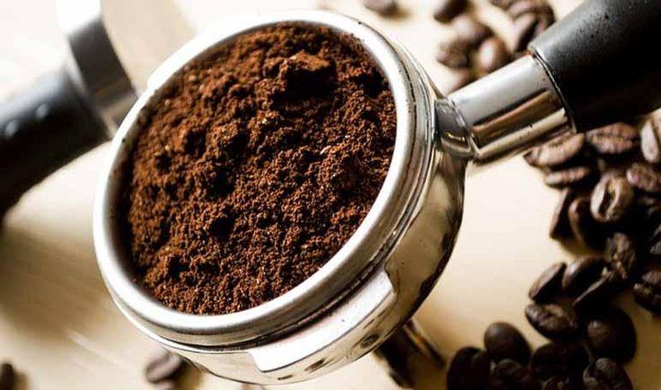Un remedio natural: ¡café contra las pulgas!