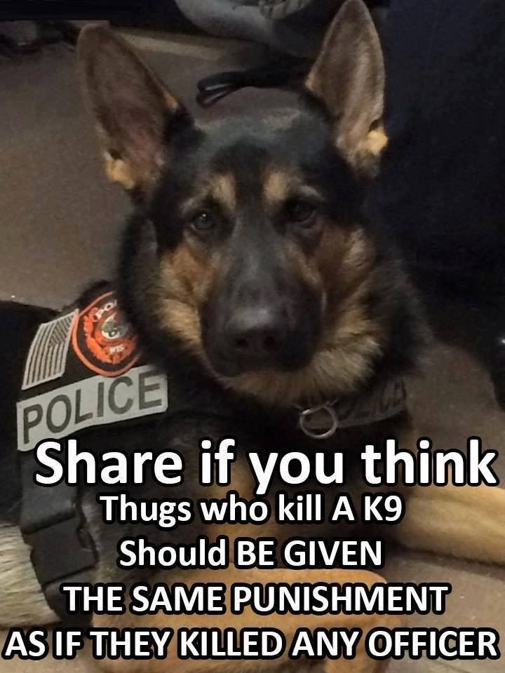 Truth! Fact! Any Criminal who attacks and injures or kills a Police K9 Hero SHOULD RECEIVE THE MAXIMUM PUNISHMENT OF THE LAW!!!