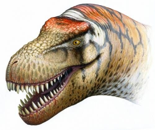 "Name:  Zhuchengtyrannus (Greek for ""Zhucheng tyrant""); pronounced ZHOO-cheng-tih-RAN-us Habitat:  Woodlands of Asia Historical Period:  Late Cretaceous (75-65 million years ago) Size and Weight:  About 35 feet long and 6-7 tons Diet:  Meat Distinguishing Characteristics:  Large size; small arms; numerous sharp teeth"