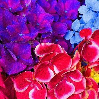 Разноцветик