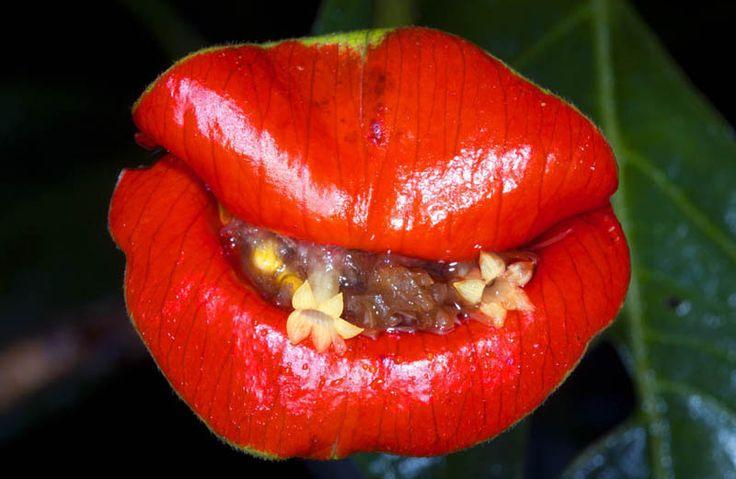 Lijstje van de week: 7x bloemen die op iets anders lijken. #mond #lippen #kiss #lijstje