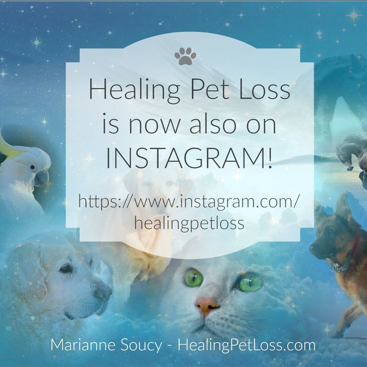 For daily updates with pet loss support and healing messages from pets in the afterlife, follow Healing Pet Loss on Instagram at https://www.instagram.com/healingpetloss #petloss