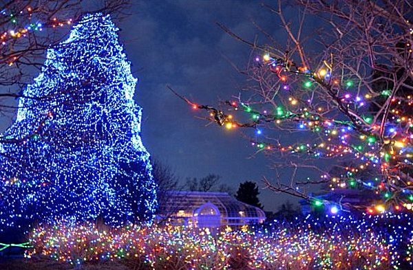 The 10 Most Amazing Christmas Trees in the U.S. - our own Toledo Zoo tree named in the top 10!