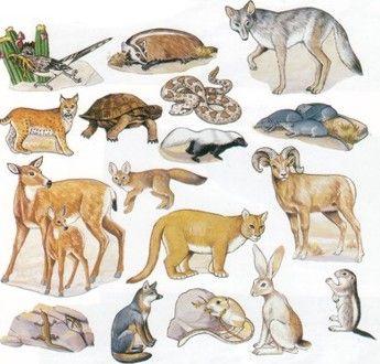 free primary animal worksheets | Desert Animals