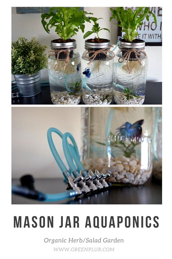 Superior 3 Mason Jar Aquaponics Kit   Build Your Own Hydroponics Herb Garden