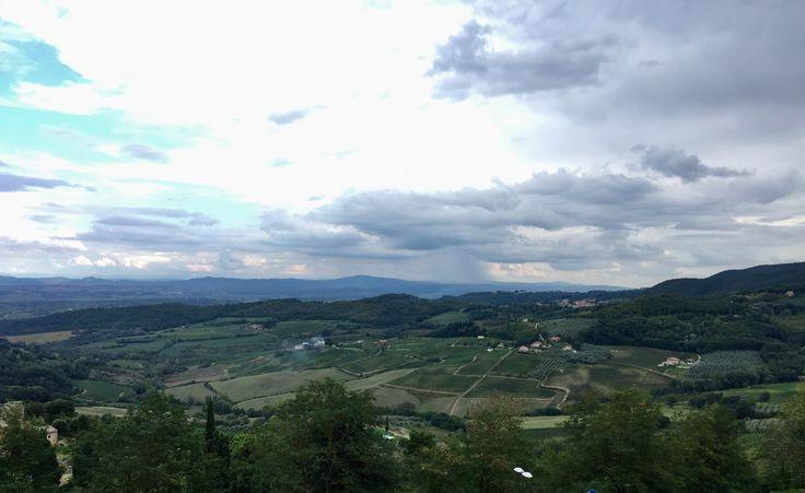 Montepulciano Vineyards