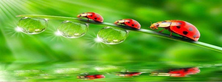 Ladybirds Facebook cover - Facebook timeline covers maker