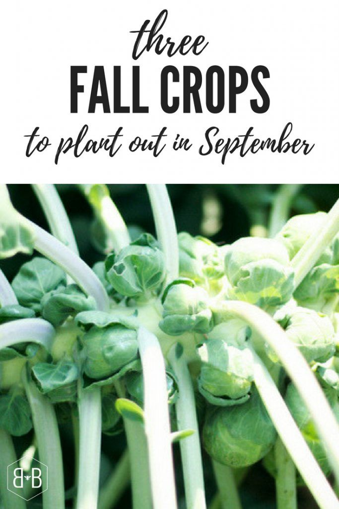 Cool Or Cold Weather Crops Are Perfect For Planting Out In September As Temperatures Are Trendin Fall Garden Vegetables Winter Vegetables Gardening Fall Crops