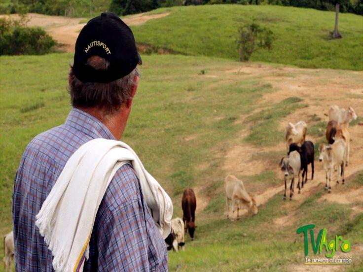 Tv Gan La mejor Vitrina Ganadera: De la Tradición a la Reforestación: El caney.