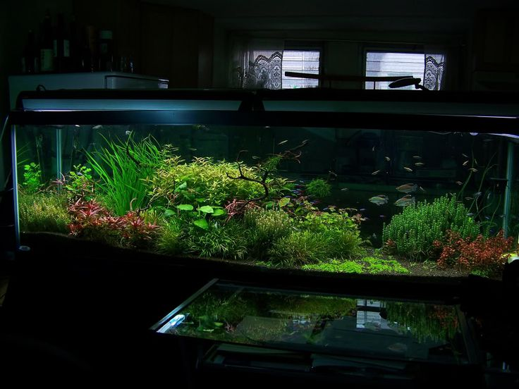 125 Gallon Planted Journal- Absolutely breathtaking tank