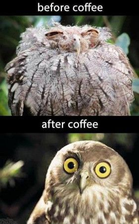 Before and after coffee... time to go make some.