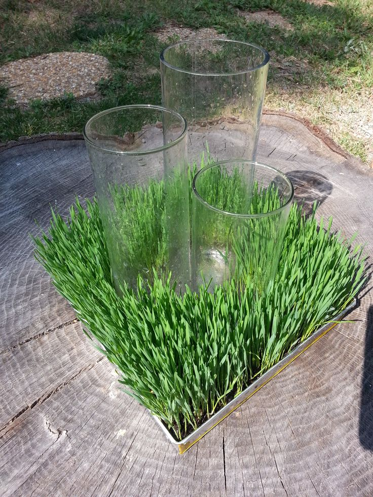 Wheat Grass Centerpiece                                                                                                                                                      More