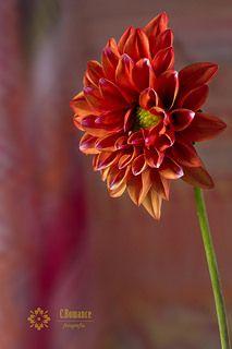 Dalia | Flickr - Photo Sharing!