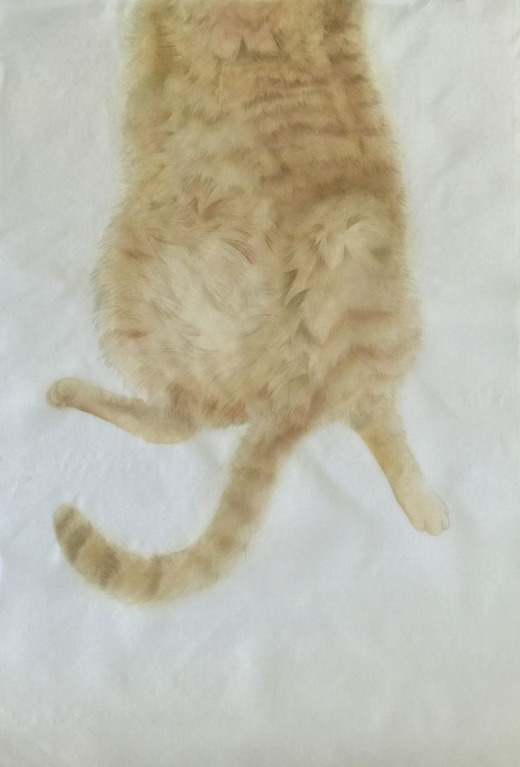Chinese Painting - Cat's Belly