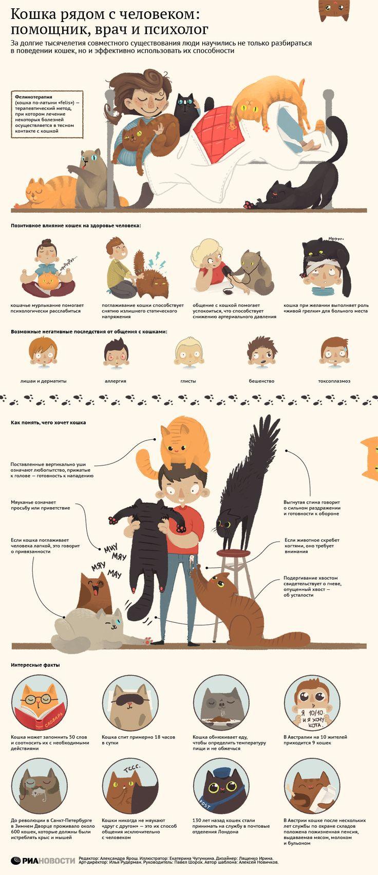 Кошка рядом с человеком: помощник, врач и психолог