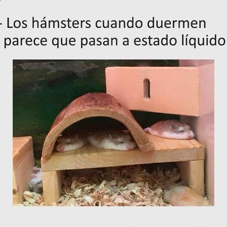 Jajajaja #memes #chistes #chistesmalos #imagenesgraciosas #humor www.megamemeces.c...