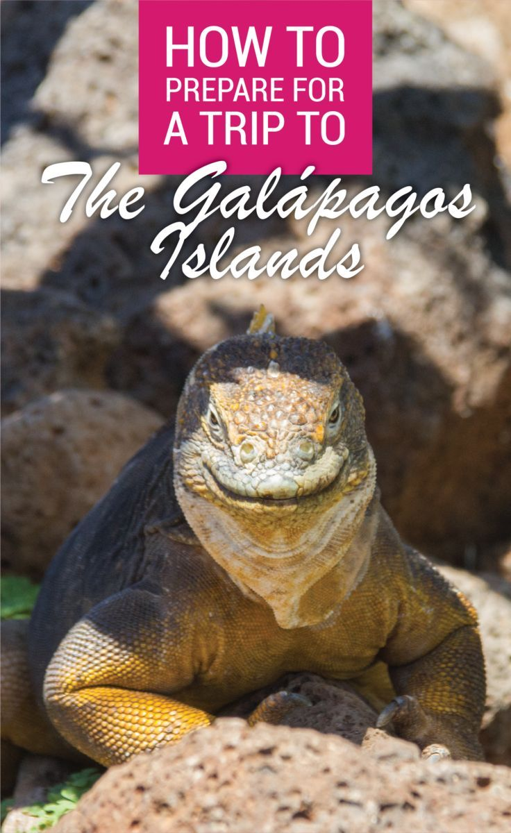 It is important to be prepared for a trip to the Galapagos Islands. Here are my top tips on How To Prepare For A Trip To The Galapagos Islands. #galapagosislands #islagalapagos #ecuador #thegalapagosislands