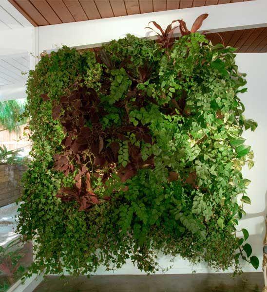 Cool Wally Three die Wand Pflanztasche von Woolly Pocket aus den USA ca x F r Indoor u Outdoor Urban Gardening Wandg rten Bei Greenbop im Online Shop