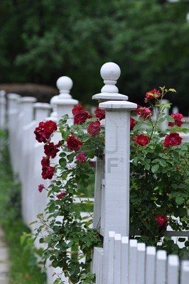 Rose Decorated Picket Fence