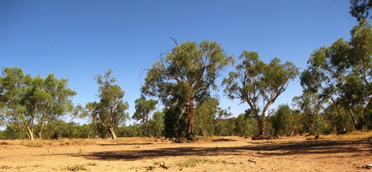 Todd River, Alice Springs, Australia
